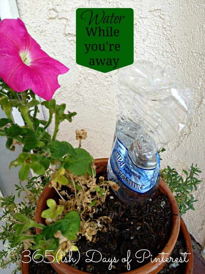 Vol. 2, Day 11: How to Water Plants While on Vacation